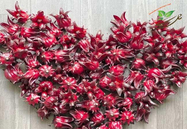 Hoa atiso đỏ