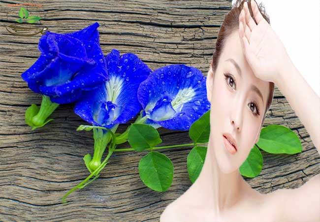 Hoa đậu biếc giảm cân trị mụn